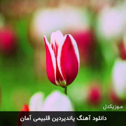 دانلود اهنگ یاندیردین قلبیمی آمان آیسل علیزاده